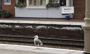 Stationgull Dumfries 17 09 05